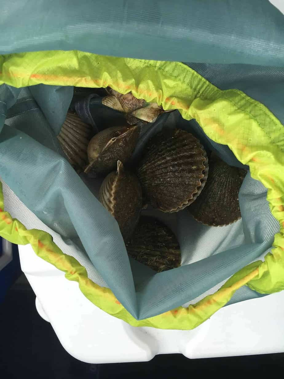 2019 Florida Scalloping