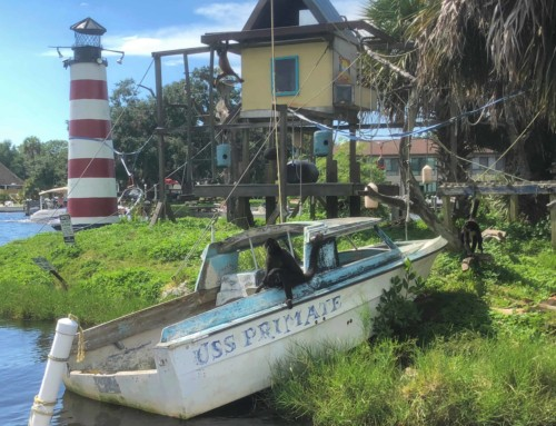 Homosassa – Is It Better Than The Crystal River?