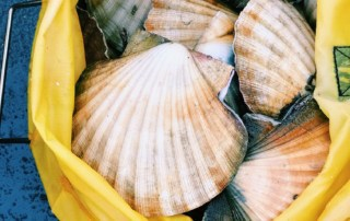 Florida Scalloping