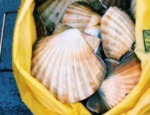 Florida Scalloping Essentials You Will Need To Scallop