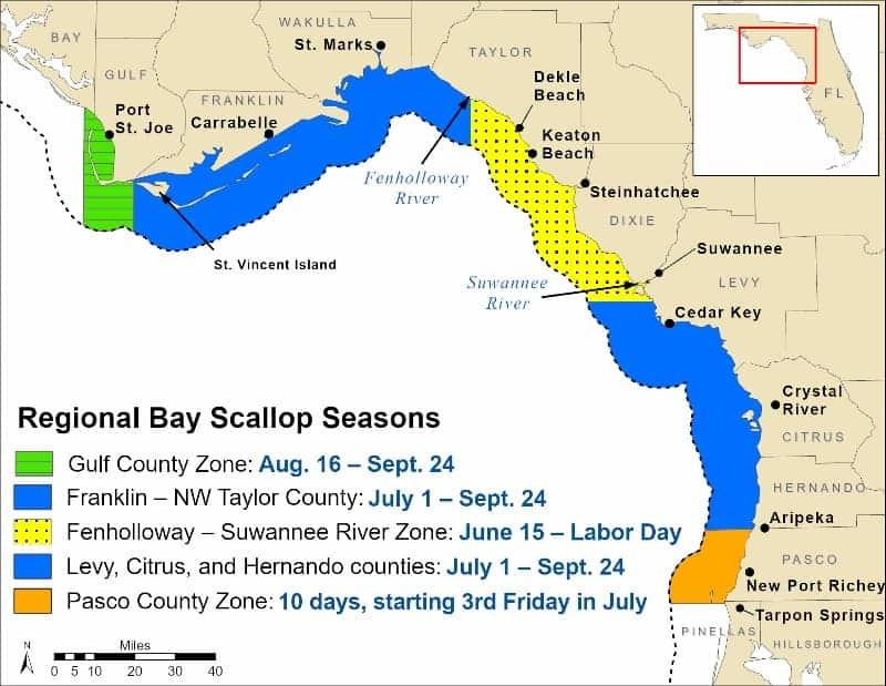 bay scallop seasons