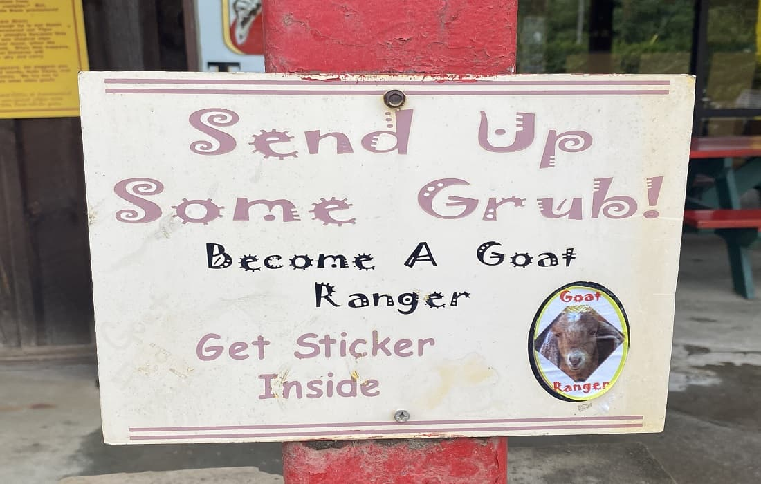 Get A Ranger Badge Goats on the Roof
