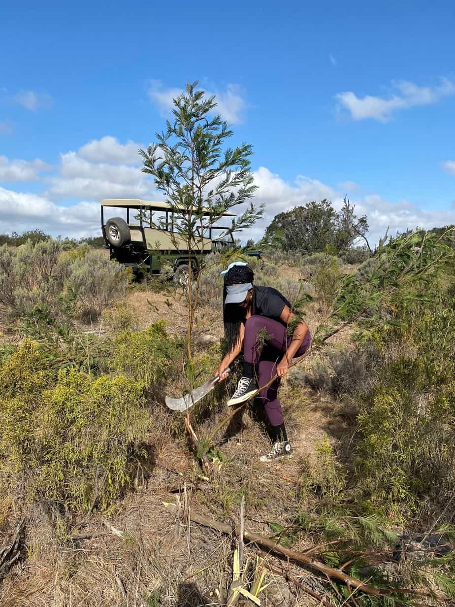 Cutting And Removing Alien Vegetation