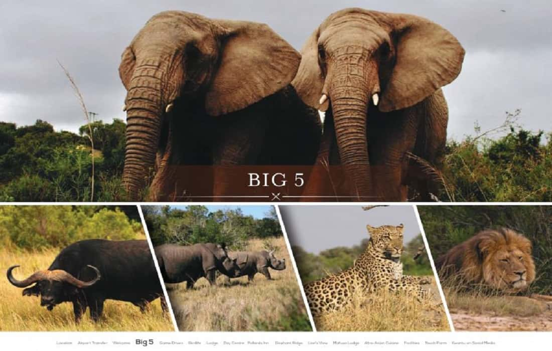 the big five african